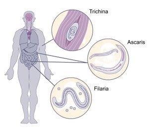 kremelina, výživové doplnky,parazity, imunita